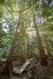 Helder zonlicht door bomen in de zomer bosscène bij Aulanko-aardpark in Finland Royalty-vrije Stock Fotografie