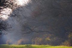 Helder zonlicht op bosweg in de herfst stock afbeeldingen