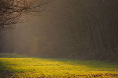 Helder zonlicht op bosweg in de herfst royalty-vrije stock foto