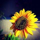 Helderder dan de zon Stock Foto
