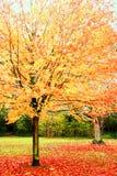 Heldere bladeren in de herfst. stock foto's