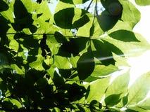 Heldere bladeren in de lente zonnige mooie schaduwen Royalty-vrije Stock Foto