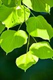 Heldere bladeren, donkere achtergrond Stock Afbeelding