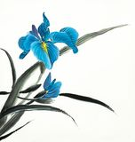 Heldere blauwe irisbloem stock illustratie