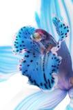 Heldere blauwe orchidee royalty-vrije stock foto