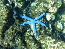 Heldere blauwe overzeese zeester in tropische overzees royalty-vrije stock foto's