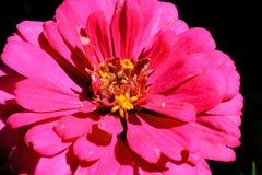 Heldere bloem Royalty-vrije Stock Afbeeldingen