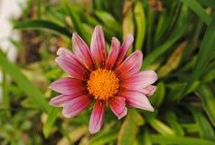 Heldere bloem in de tuin Stock Afbeeldingen