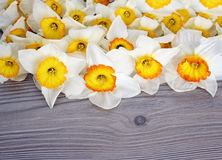 Heldere bloemen stock foto's