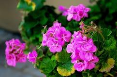 Heldere bloemen Royalty-vrije Stock Fotografie