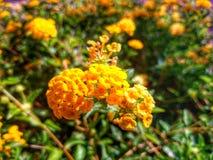 Heldere bloemen Stock Foto