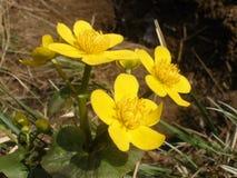 Heldere bloemen in een bosopen plek stock fotografie
