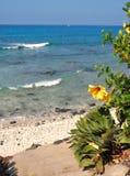 Heldere bloemen en een luie dag in paradijs Royalty-vrije Stock Fotografie