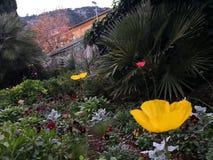 Heldere bloemen en palm in Villefranche sur Mer Frankrijk royalty-vrije stock afbeeldingen