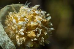 Heldere bloemen macrofoto Stock Foto's