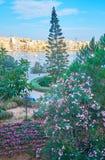 Heldere bloemen in Onafhankelijkheidstuin, Sliema, Malta royalty-vrije stock afbeeldingen