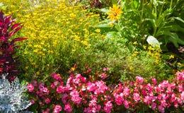 Heldere bloemen op het bloembed Stock Foto