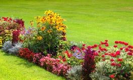 Heldere bloemen op het bloembed Stock Fotografie