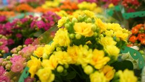 Heldere bloemen in potten stock video