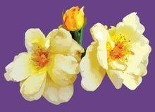 Heldere bloemen van de zomer Stock Afbeelding