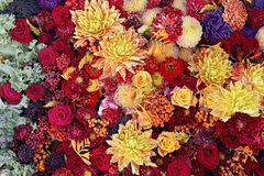 Heldere bloemexplosie Royalty-vrije Stock Afbeelding