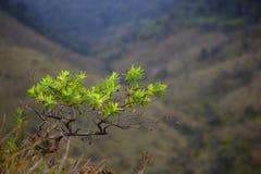 Heldere boombladeren op een achtergrond van vaag Royalty-vrije Stock Fotografie