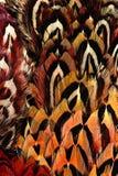 Heldere bruine veergroep één of andere vogel Stock Afbeeldingen