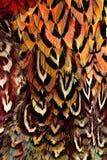 Heldere bruine veergroep één of andere vogel Royalty-vrije Stock Afbeelding