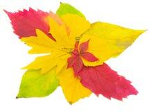 Heldere de herfstbladeren Stock Foto's