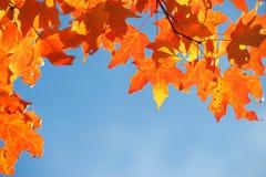 Heldere de herfstbladeren tegen blauwe hemel stock foto