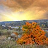 Heldere de herfstboom op rode zonsondergangachtergrond stock afbeeldingen