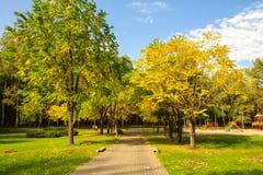 Heldere de herfstdag in het park Royalty-vrije Stock Fotografie