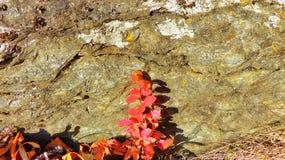 Heldere de herfsttak op een achtergrond van steen Stock Foto