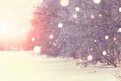 Heldere de winterzonsopgang op parkachtergrond Stock Afbeeldingen