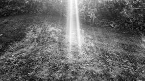 Heldere de zomerzonnestralen op zwart-wit de zomergazon Stock Foto's