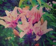 Heldere dichte omhooggaande foto van tedere orchideeën in Royalty-vrije Stock Afbeelding