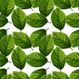 Heldere en kleurrijke geweven groene bladeren op wit naadloos patroon als achtergrond vector illustratie