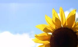 Heldere en mooie bloem Stock Foto's