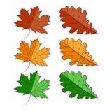 Heldere geelgroene de dalingsbomen van de herfstbladeren Geïsoleerd Voorwerp stock illustratie