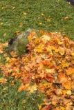 Heldere gekleurde bladeren op een boom Royalty-vrije Stock Afbeeldingen