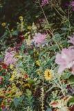 Heldere gekleurde installaties met bloemen Stock Fotografie