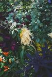 Heldere gekleurde installaties met bloemen Stock Foto