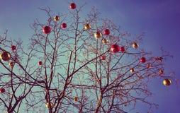 Heldere gekleurde Kerstmisdecoratie op een ontbladerde boom in Mos Stock Foto's