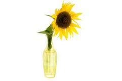 Heldere gele bloem van zonnebloem in een glasvaas royalty-vrije stock afbeelding