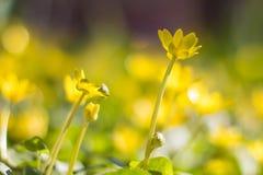 Heldere gele bloemen Stock Foto
