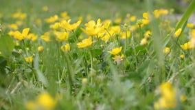 Heldere gele bloemen stock video