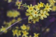 Heldere gele bloemen royalty-vrije stock afbeeldingen