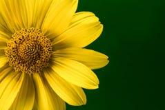 Heldere gele de zomerbloem stock foto