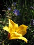Heldere gele en blauwe bloemen 2 stock afbeelding
