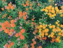Heldere gele en oranje bloemen Stock Fotografie